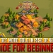 Get More Gold Rise of Kingdoms Guide